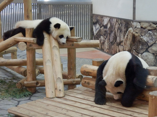 Panda2